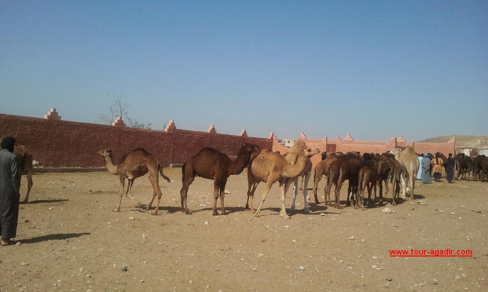 camel market1